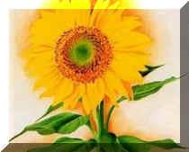 Tres minutos desde una flor